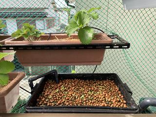 クレソンの水耕栽培容器.jpeg