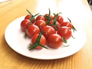 収穫したトマトぺぺ.jpg