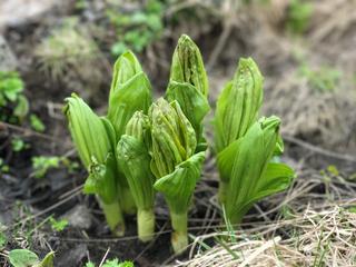 立山 植物2.jpg