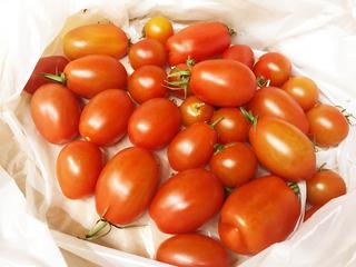 赤くなったトマト.jpg