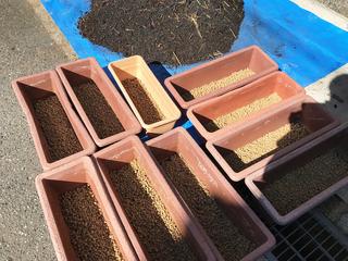 赤玉土を敷いたプランター.jpg