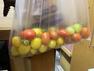 部屋の中で色付くのを待つトマト.jpeg